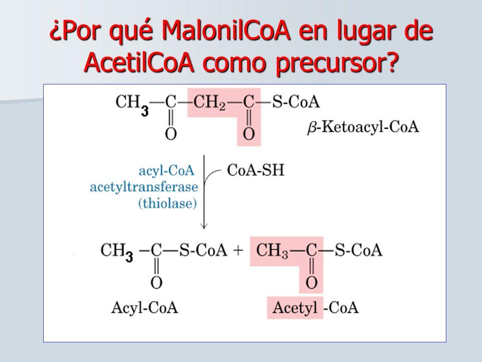 ¿Por qué MalonilCoA en lugar de AcetilCoA como precursor? 3