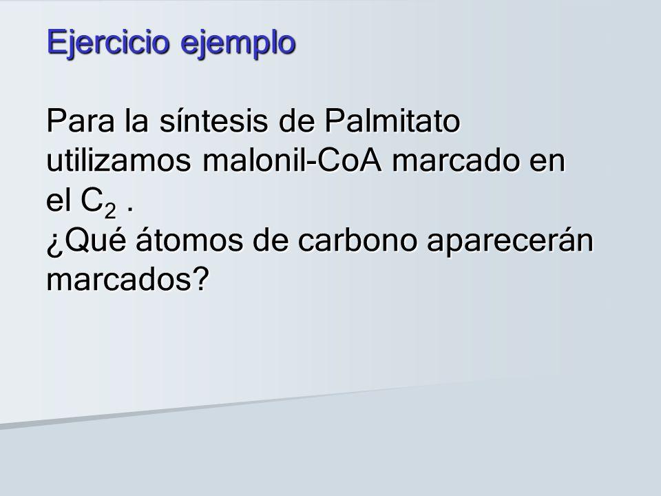 Ejercicio ejemplo Para la síntesis de Palmitato utilizamos malonil-CoA marcado en el C 2.