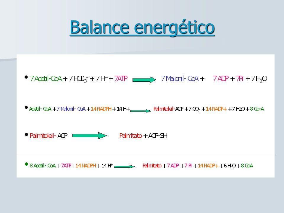 Balance energético
