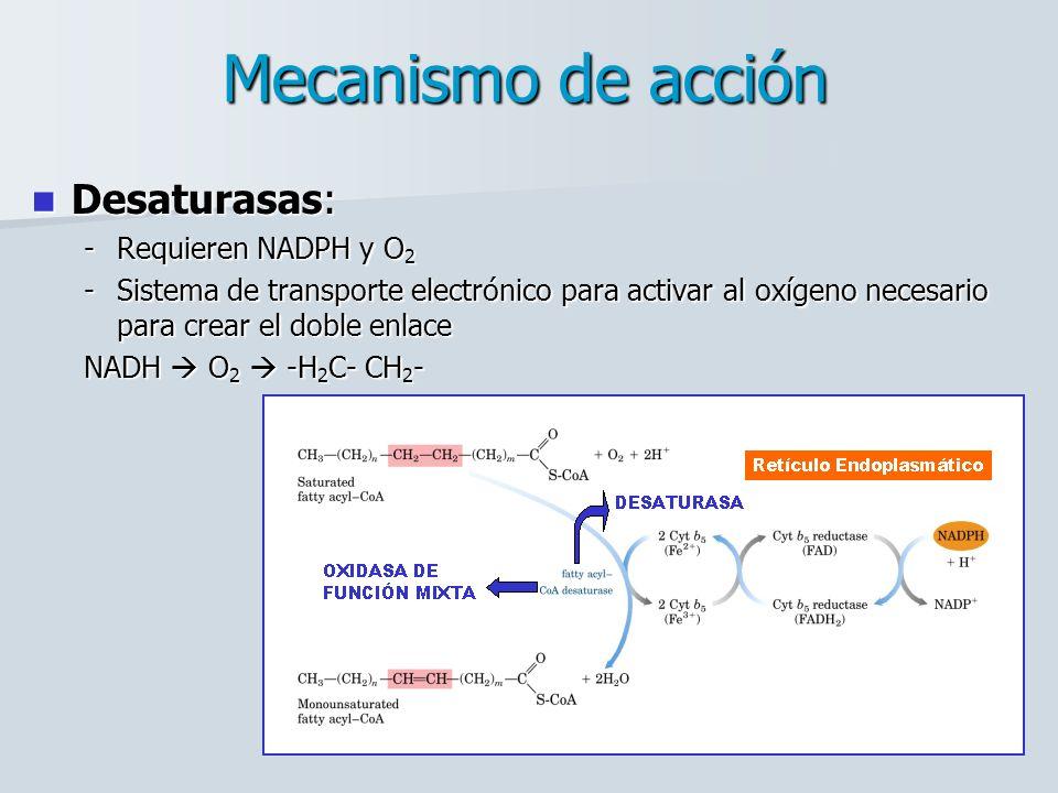 Mecanismo de acción Desaturasas: Desaturasas: -Requieren NADPH y O 2 -Sistema de transporte electrónico para activar al oxígeno necesario para crear el doble enlace NADH O 2 -H 2 C- CH 2 -