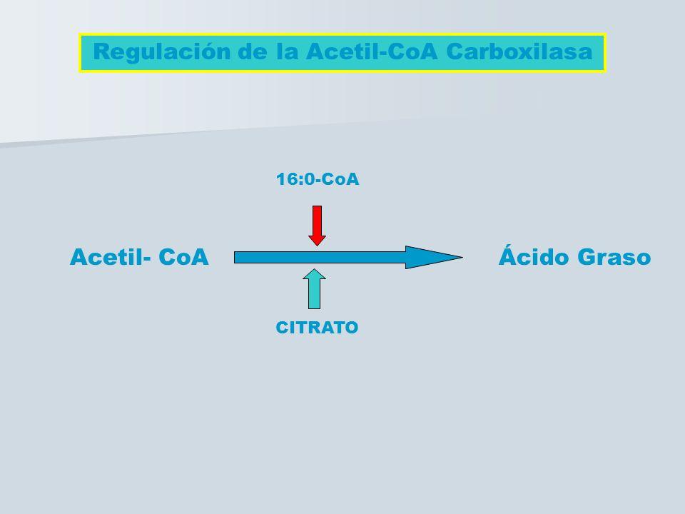 Regulación de la Acetil-CoA Carboxilasa Acetil- CoA Ácido Graso CITRATO 16:0-CoA