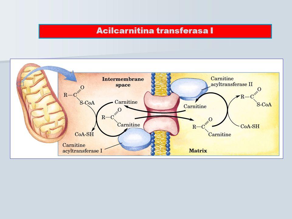Acilcarnitina transferasa I