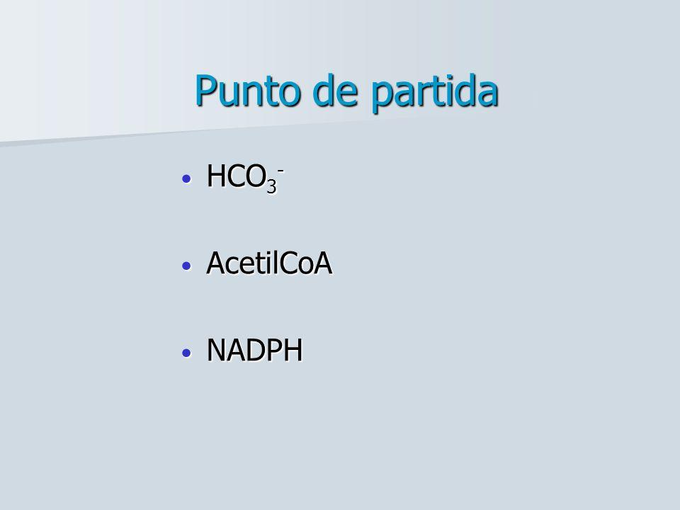 Punto de partida HCO 3 - HCO 3 - AcetilCoA AcetilCoA NADPH NADPH