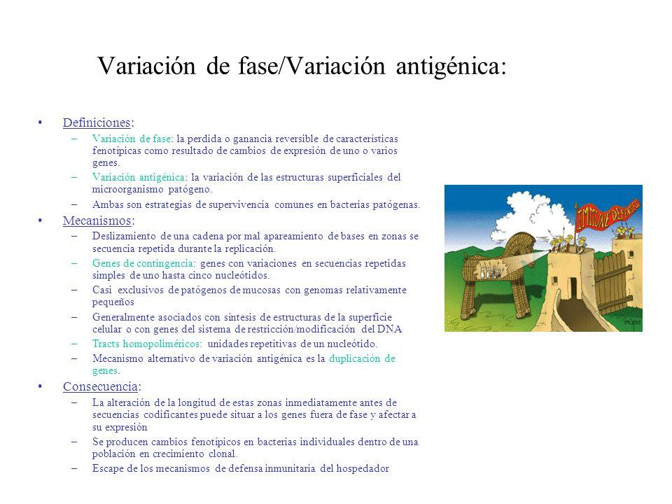 Variación de fase/Variación antigénica: Definiciones: –Variación de fase: la perdida o ganancia reversible de características fenotípicas como resulta