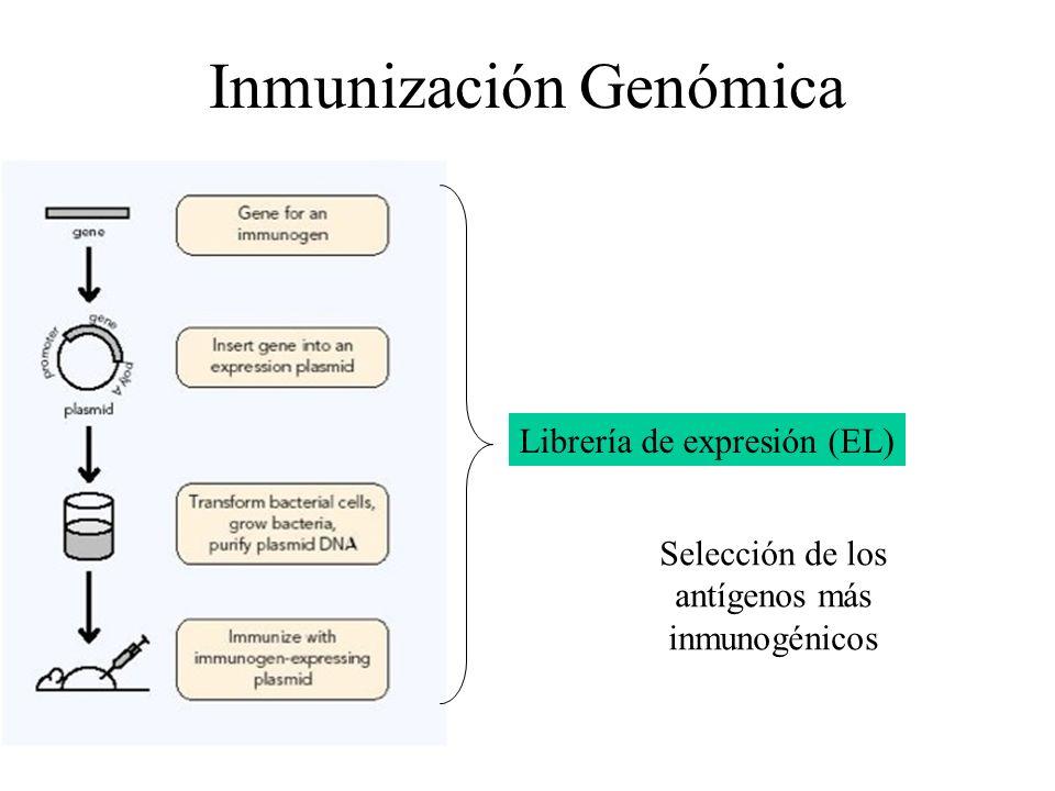 Inmunización Genómica Librería de expresión (EL) Selección de los antígenos más inmunogénicos