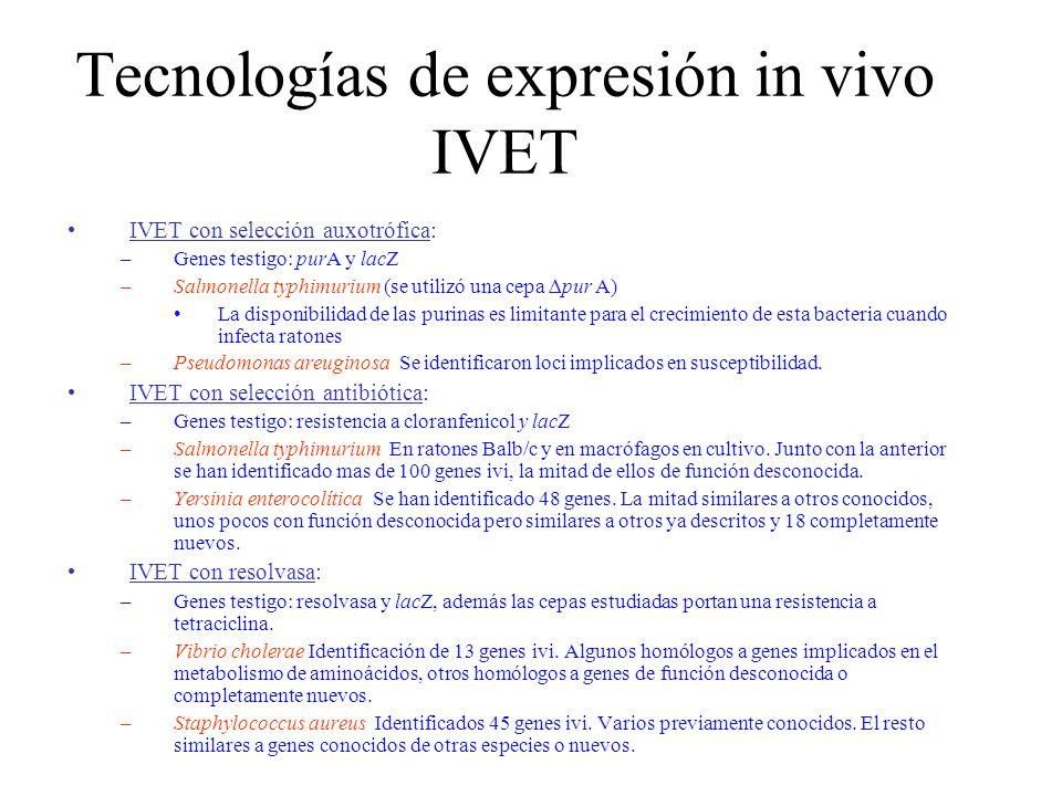 Tecnologías de expresión in vivo IVET IVET con selección auxotrófica: –Genes testigo: purA y lacZ –Salmonella typhimurium (se utilizó una cepa pur A)