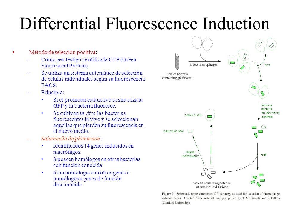 Differential Fluorescence Induction Método de selección positiva: –Como gen testigo se utiliza la GFP (Green Flourescent Protein) –Se utiliza un siste