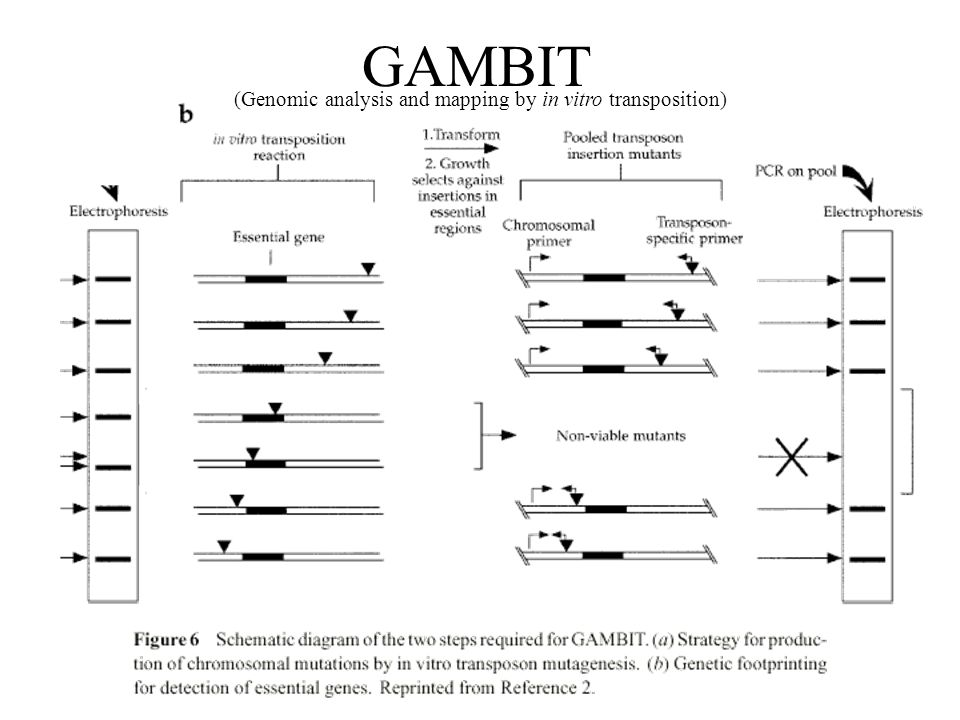 (Genomic analysis and mapping by in vitro transposition) GAMBIT