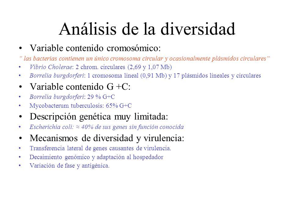 Análisis de la diversidad Variable contenido cromosómico: las bacterias contienen un único cromosoma circular y ocasionalmente plásmidos circulares Vi