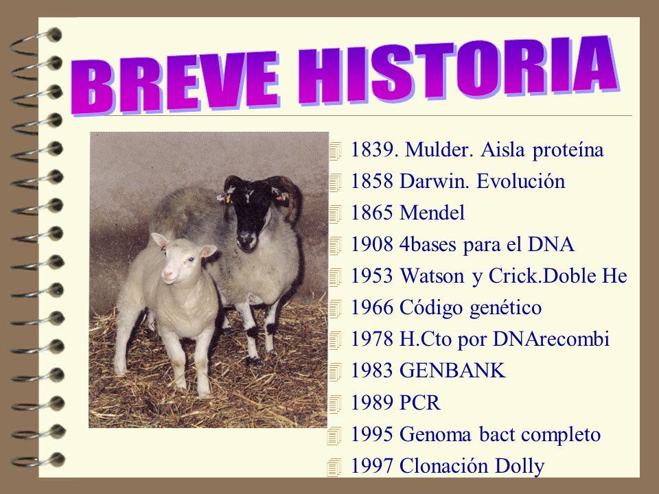 4 1839. Mulder. Aisla proteína 4 1858 Darwin. Evolución 4 1865 Mendel 4 1908 4bases para el DNA 4 1953 Watson y Crick.Doble He 4 1966 Código genético