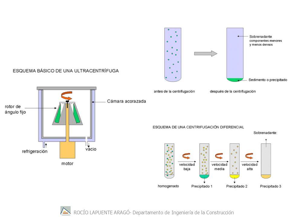 ROCÍO LAPUENTE ARAGÓ- Departamento de Ingeniería de la Construcción