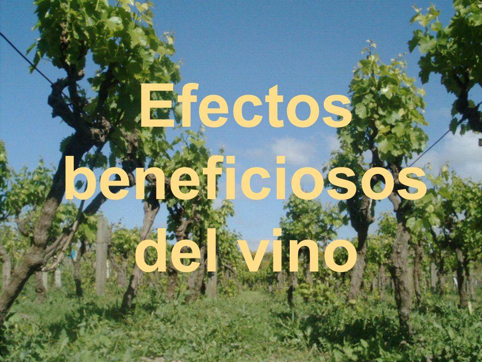 Efectos beneficiosos del vino