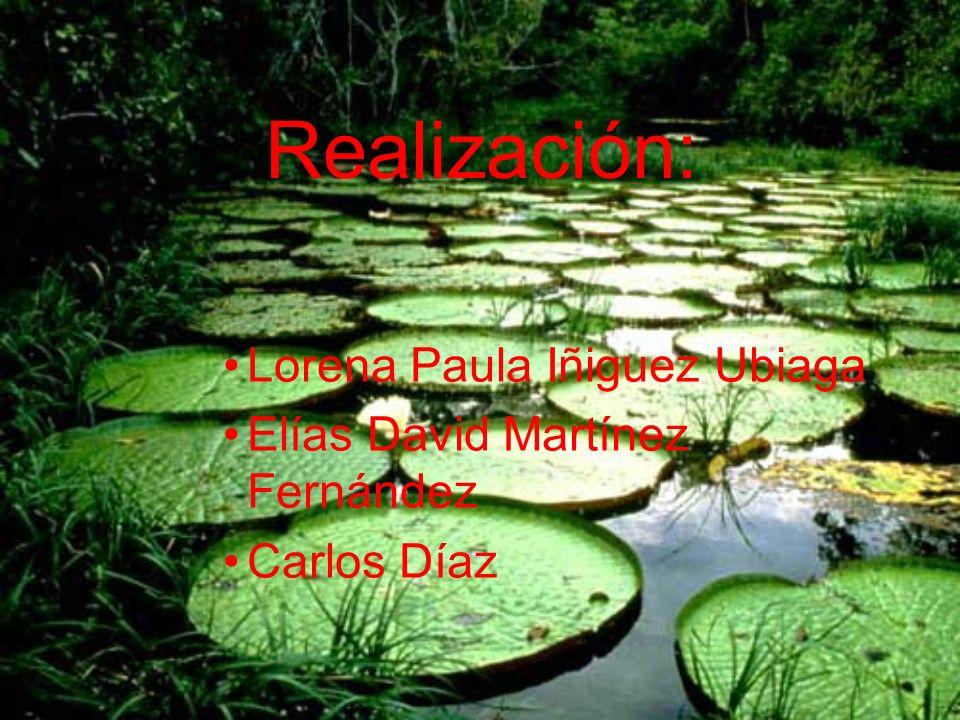 Realización: Lorena Paula Iñiguez Ubiaga Elías David Martínez Fernández Carlos Díaz