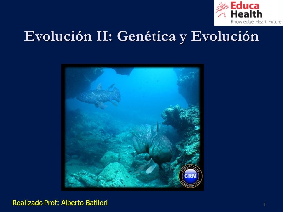 1 Evolución II: Genética y Evolución Realizado Prof: Alberto Batllori