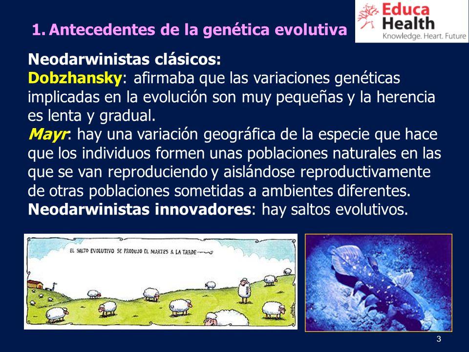 3 1.Antecedentes de la genética evolutiva Neodarwinistas clásicos: Dobzhansky: afirmaba que las variaciones genéticas implicadas en la evolución son m