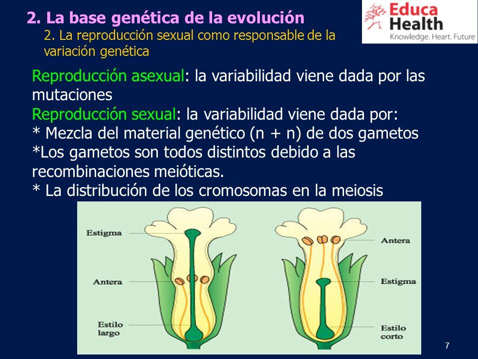 7 2. La base genética de la evolución 2. La reproducción sexual como responsable de la variación genética Reproducción asexual: la variabilidad viene
