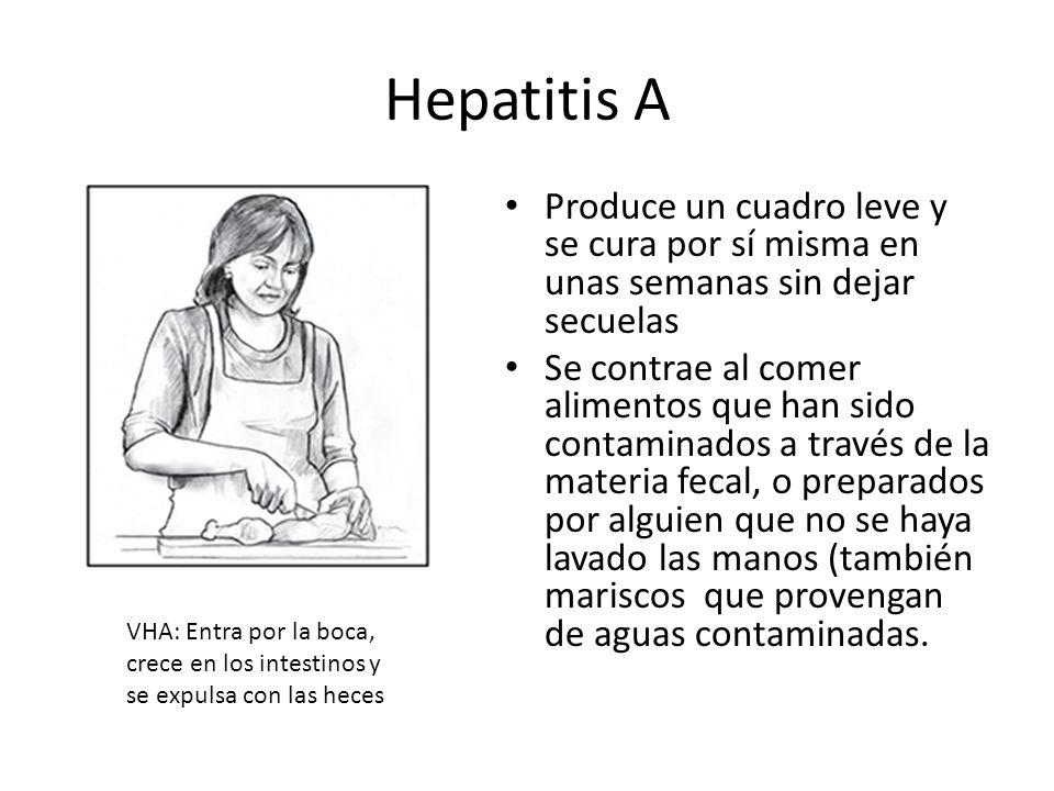 Hepatitis A Produce un cuadro leve y se cura por sí misma en unas semanas sin dejar secuelas Se contrae al comer alimentos que han sido contaminados a