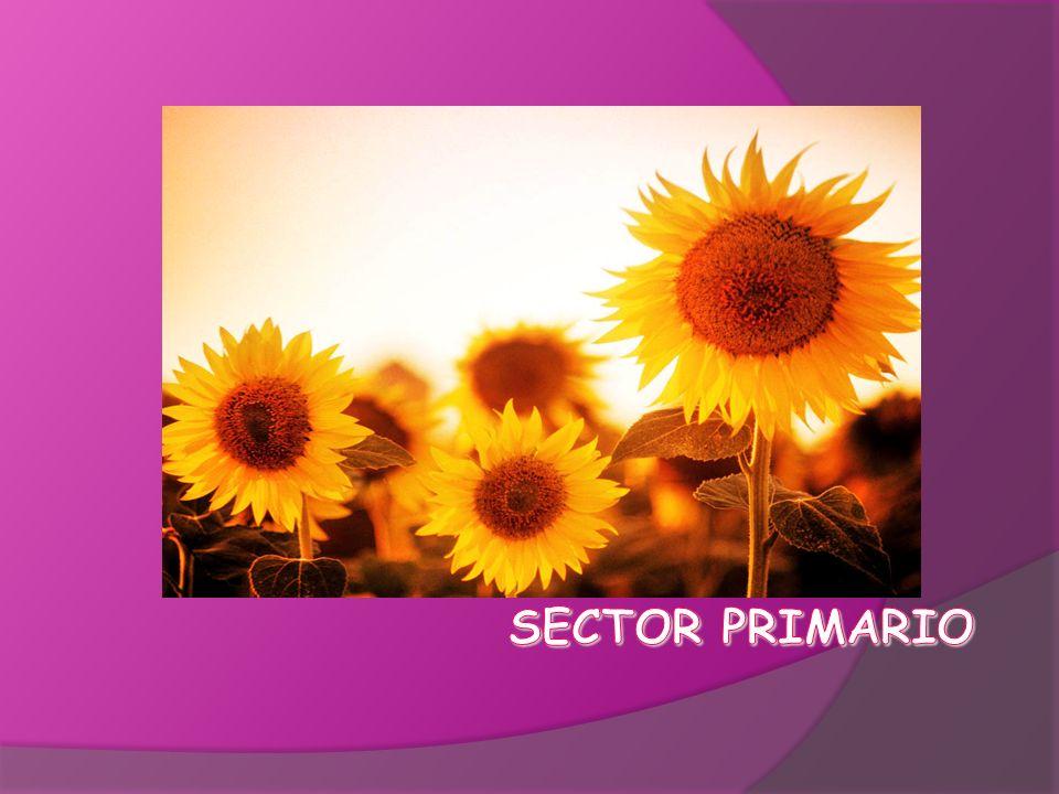 1.El sector primario.