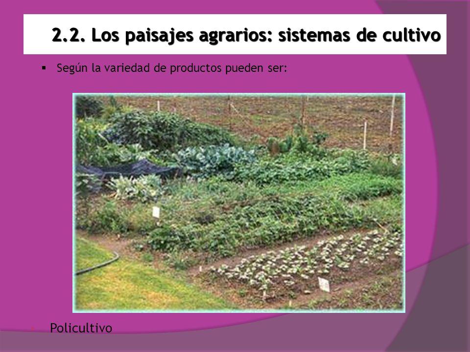 2.2. Los paisajes agrarios: sistemas de cultivo Policultivo Según la variedad de productos pueden ser: