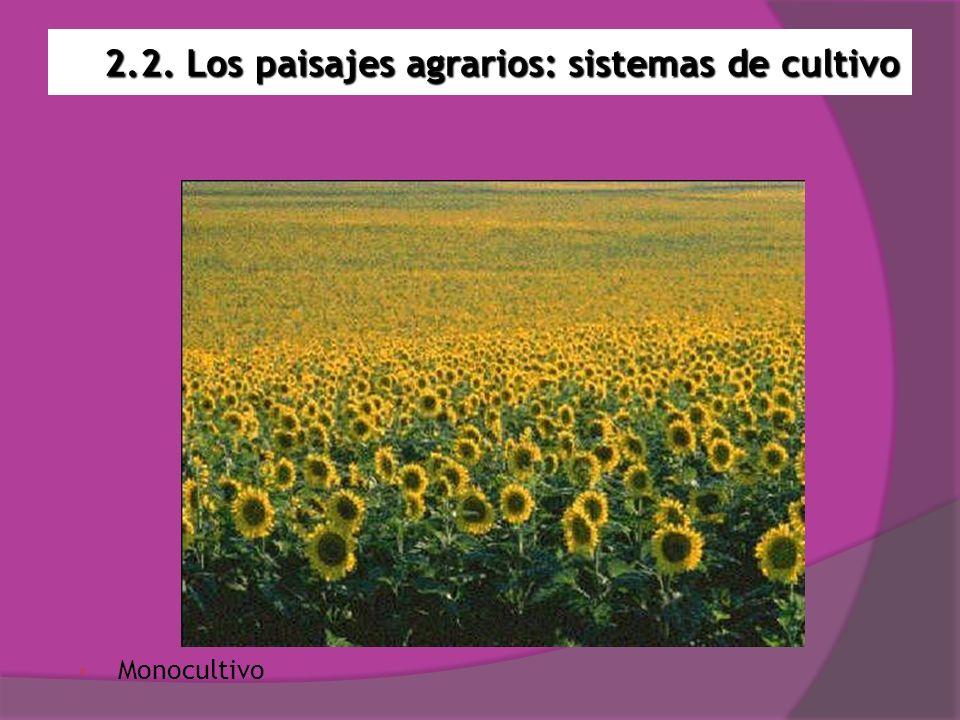 2.2. Los paisajes agrarios: sistemas de cultivo Monocultivo