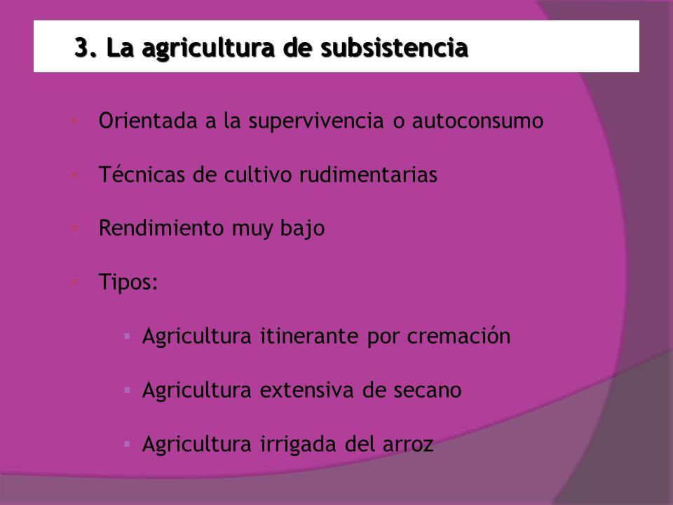 3. La agricultura de subsistencia Orientada a la supervivencia o autoconsumo Técnicas de cultivo rudimentarias Rendimiento muy bajo Tipos: Agricultura