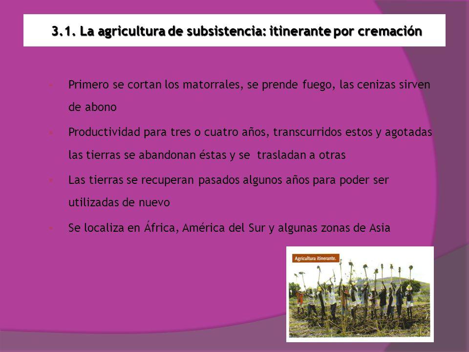 3.1. La agricultura de subsistencia: itinerante por cremación Primero se cortan los matorrales, se prende fuego, las cenizas sirven de abono Productiv