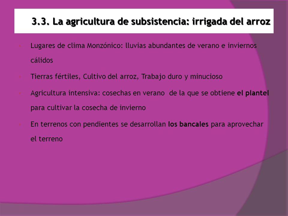 3.3. La agricultura de subsistencia: irrigada del arroz Lugares de clima Monzónico: lluvias abundantes de verano e inviernos cálidos Tierras fértiles,