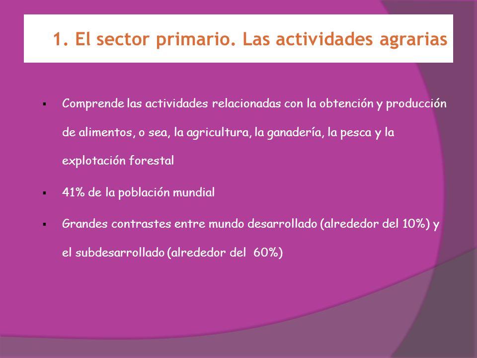 1. El sector primario. Las actividades agrarias Comprende las actividades relacionadas con la obtención y producción de alimentos, o sea, la agricultu