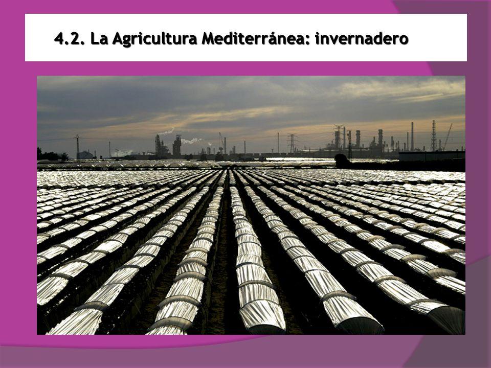 4.2. La Agricultura Mediterránea: invernadero