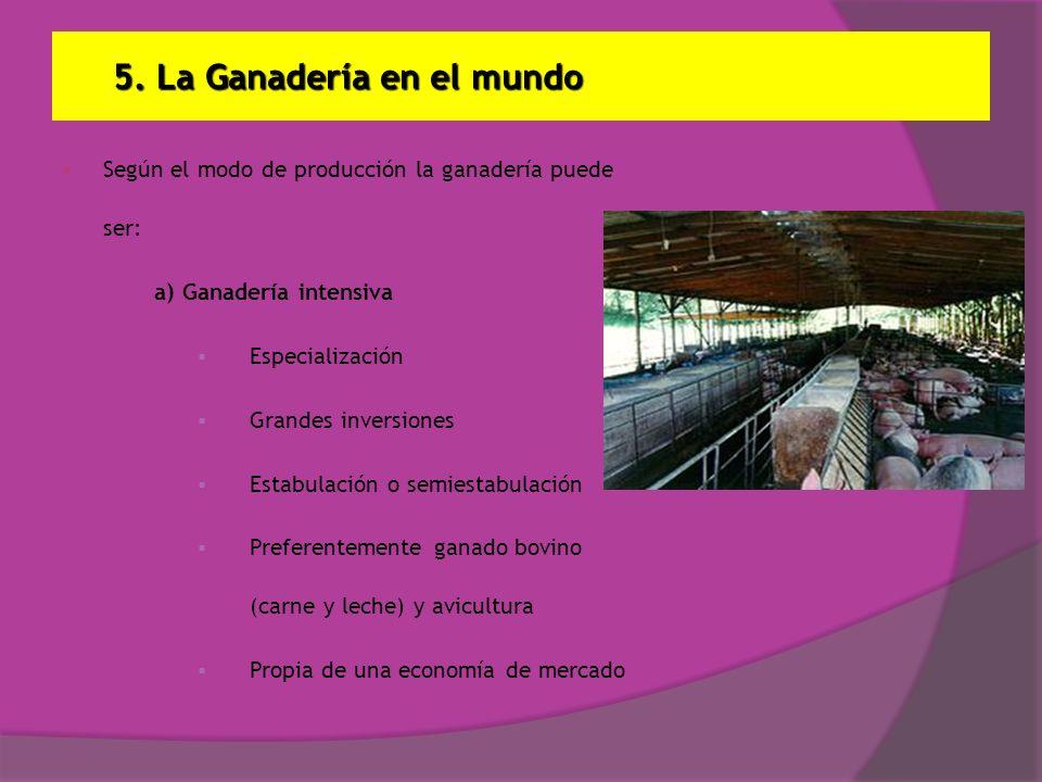 5. La Ganadería en el mundo Según el modo de producción la ganadería puede ser: a) Ganadería intensiva Especialización Grandes inversiones Estabulació