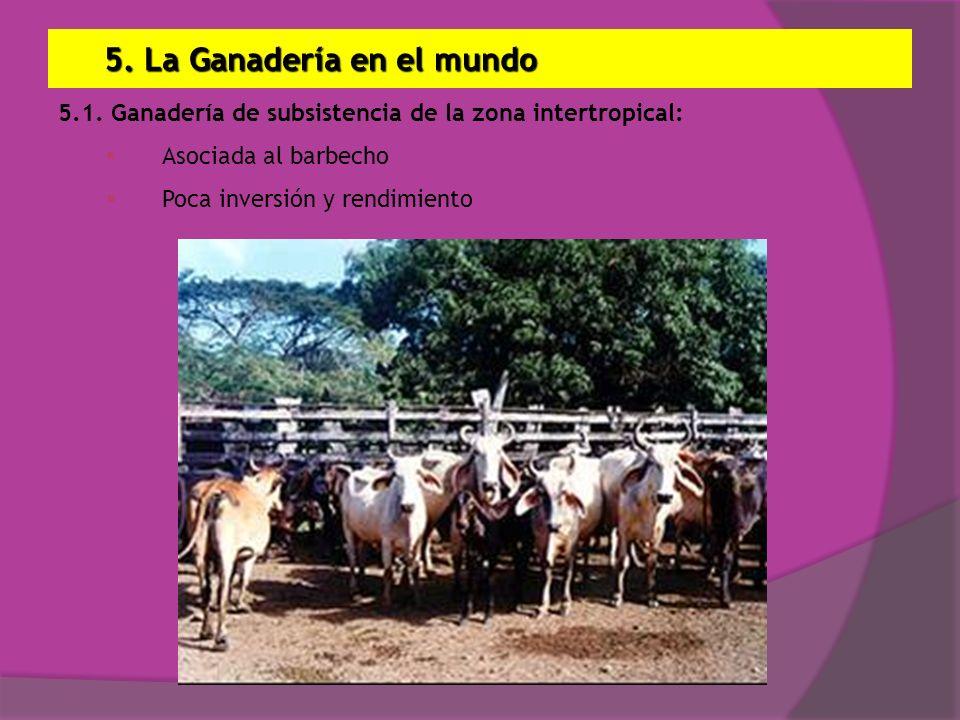 5. La Ganadería en el mundo 5.1. Ganadería de subsistencia de la zona intertropical: Asociada al barbecho Poca inversión y rendimiento