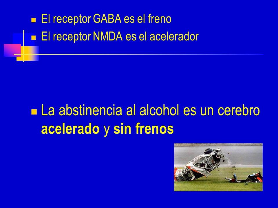 El receptor GABA es el freno El receptor NMDA es el acelerador La abstinencia al alcohol es un cerebro acelerado y sin frenos