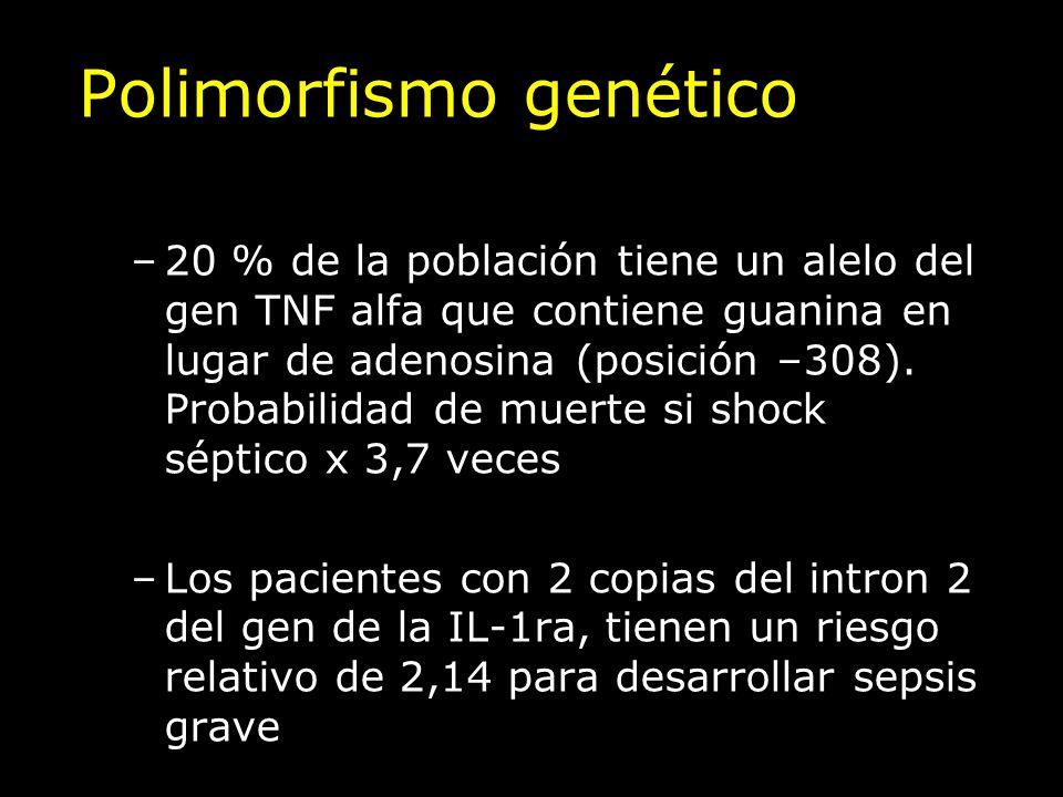 Polimorfismo genético –20 % de la población tiene un alelo del gen TNF alfa que contiene guanina en lugar de adenosina (posición –308). Probabilidad d