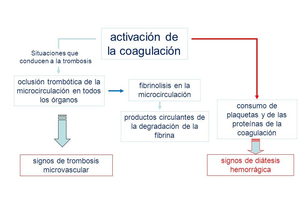 activación de la coagulación oclusión trombótica de la microcirculación en todos los órganos fibrinolisis en la microcirculación productos circulantes