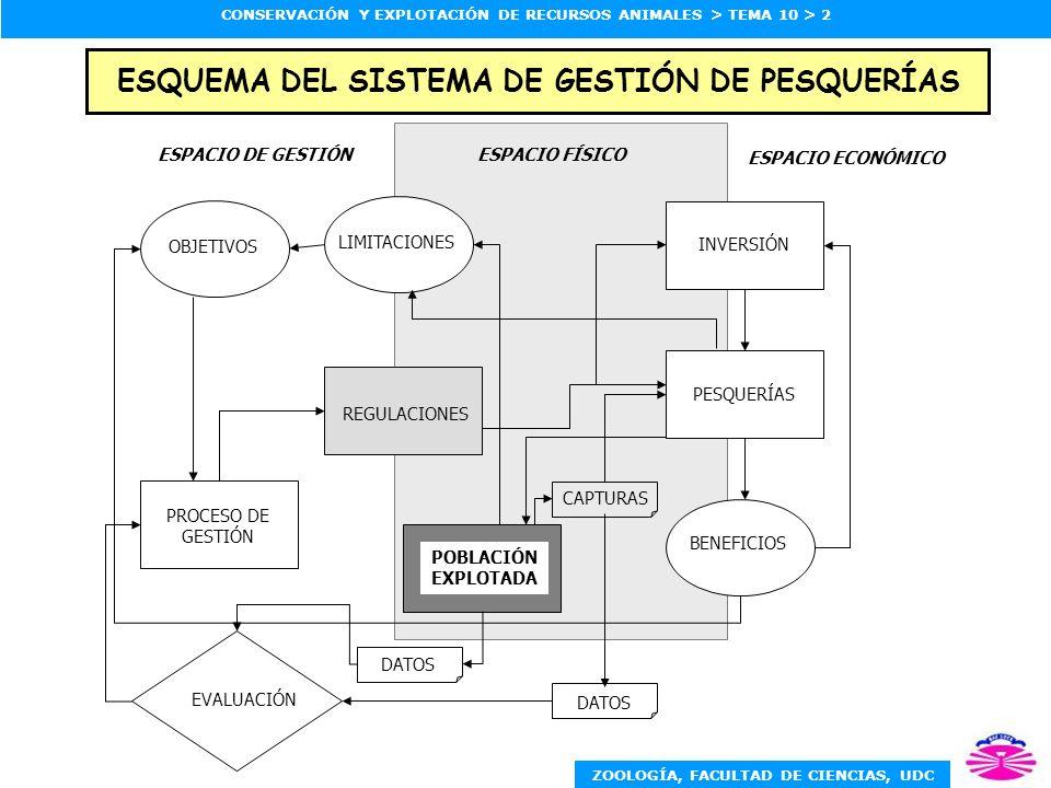 ZOOLOGÍA, FACULTAD DE CIENCIAS, UDC CONSERVACIÓN Y EXPLOTACIÓN DE RECURSOS ANIMALES > TEMA 10 > 3 PROCESO CÍCLICO DE GESTIÓN DE PESQUERÍAS DECISIÓN MONITORIZACIÓN CONTROL MUESTREO ESTADÍSTICAS INVESTIGACIÓN INFORMACIÓN EVALUACIÓN OPCIONES CONSULTA ACCIONES OBJETIVOS IMPLEMENTACIÓN INFORMAR LEGISLAR REGULAR
