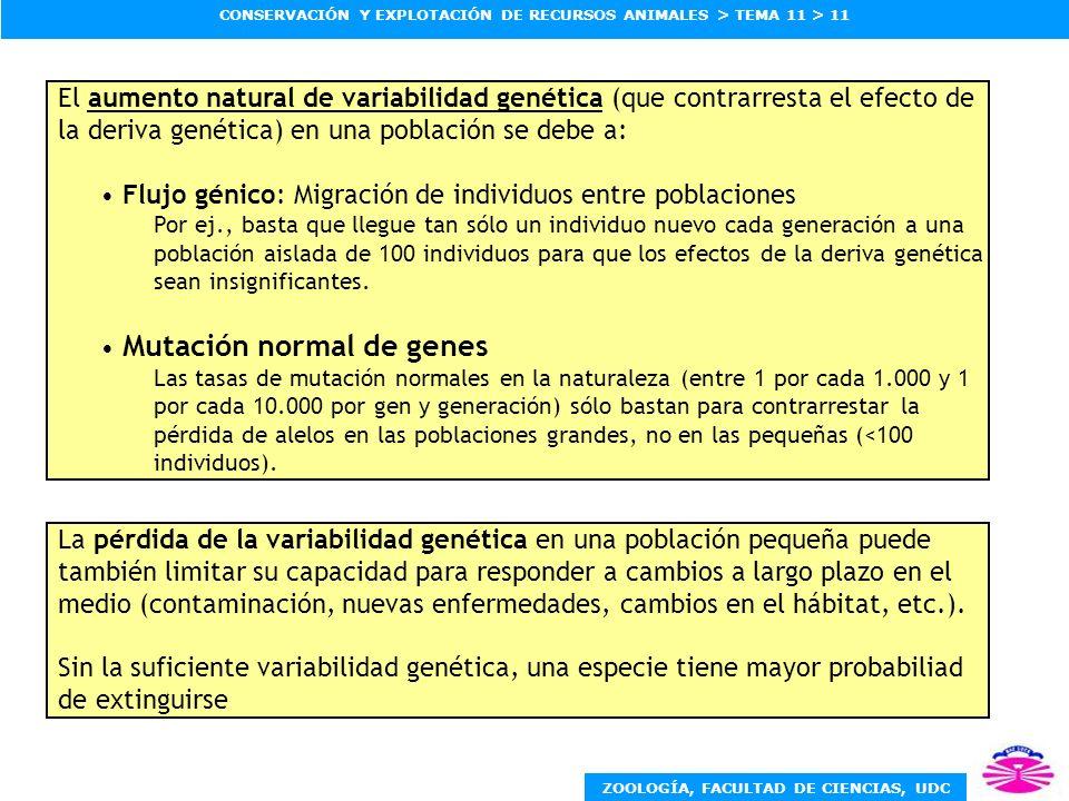 ZOOLOGÍA, FACULTAD DE CIENCIAS, UDC CONSERVACIÓN Y EXPLOTACIÓN DE RECURSOS ANIMALES > TEMA 11 > 11 El aumento natural de variabilidad genética (que co