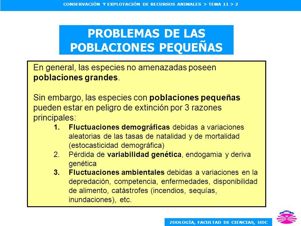 ZOOLOGÍA, FACULTAD DE CIENCIAS, UDC CONSERVACIÓN Y EXPLOTACIÓN DE RECURSOS ANIMALES > TEMA 11 > 2 PROBLEMAS DE LAS POBLACIONES PEQUEÑAS En general, la