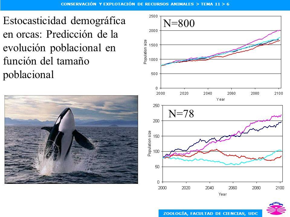 ZOOLOGÍA, FACULTAD DE CIENCIAS, UDC CONSERVACIÓN Y EXPLOTACIÓN DE RECURSOS ANIMALES > TEMA 11 > 6 N=78 N=800 Estocasticidad demográfica en orcas: Pred