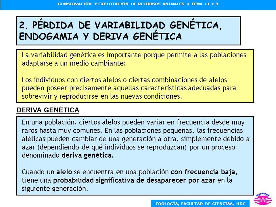 ZOOLOGÍA, FACULTAD DE CIENCIAS, UDC CONSERVACIÓN Y EXPLOTACIÓN DE RECURSOS ANIMALES > TEMA 11 > 9 2. PÉRDIDA DE VARIABILIDAD GENÉTICA, ENDOGAMIA Y DER