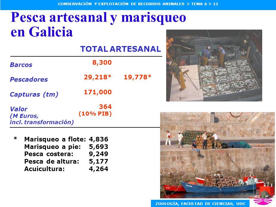 ZOOLOGÍA, FACULTAD DE CIENCIAS, UDC CONSERVACIÓN Y EXPLOTACIÓN DE RECURSOS ANIMALES > TEMA 6 > 11 Pesca artesanal y marisqueo en Galicia 8,300 29,218* 171,000 364 (10% PIB) Barcos Pescadores Capturas (tm) Valor (M Euros, incl.