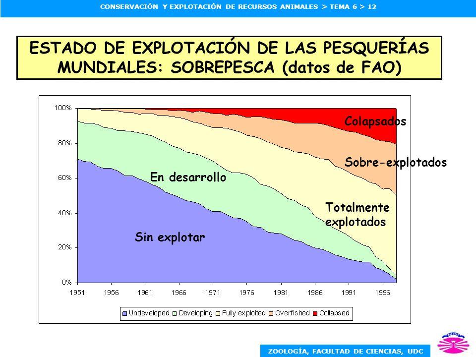 ZOOLOGÍA, FACULTAD DE CIENCIAS, UDC CONSERVACIÓN Y EXPLOTACIÓN DE RECURSOS ANIMALES > TEMA 6 > 12 Colapsados Sobre-explotados Totalmente explotados En desarrollo Sin explotar ESTADO DE EXPLOTACIÓN DE LAS PESQUERÍAS MUNDIALES: SOBREPESCA (datos de FAO)