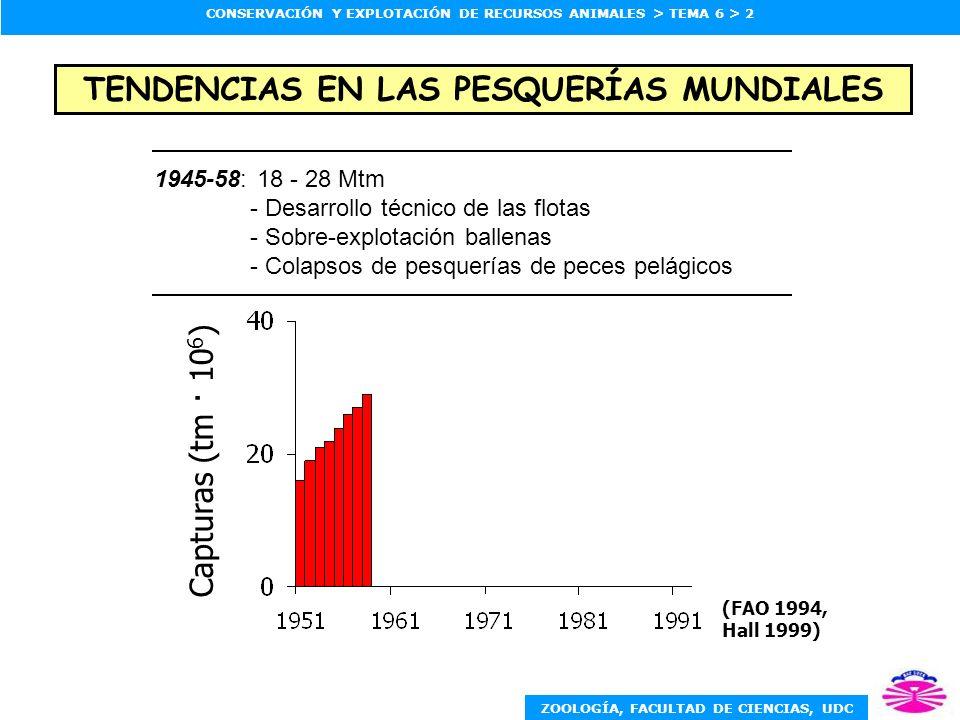 ZOOLOGÍA, FACULTAD DE CIENCIAS, UDC CONSERVACIÓN Y EXPLOTACIÓN DE RECURSOS ANIMALES > TEMA 6 > 2 1945-58: 18 - 28 Mtm - Desarrollo técnico de las flotas - Sobre-explotación ballenas - Colapsos de pesquerías de peces pelágicos (FAO 1994, Hall 1999) Capturas (tm · 10 6 ) TENDENCIAS EN LAS PESQUERÍAS MUNDIALES