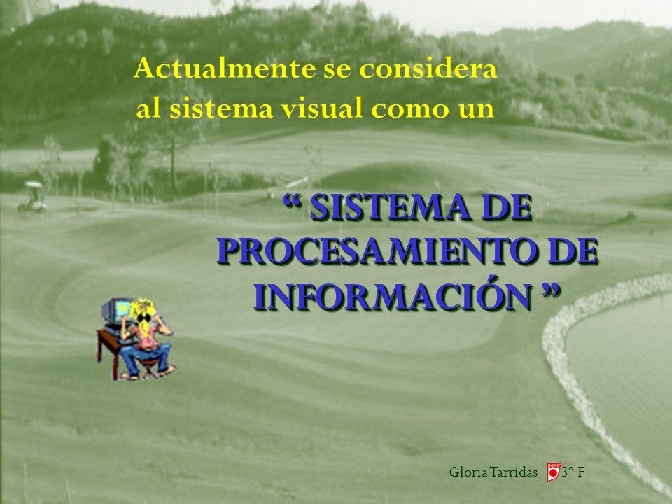 Gloria Tarridas 3º F Actualmente se considera al sistema visual como un SISTEMA DE PROCESAMIENTO DE INFORMACIÓN SISTEMA DE PROCESAMIENTO DE INFORMACIÓN