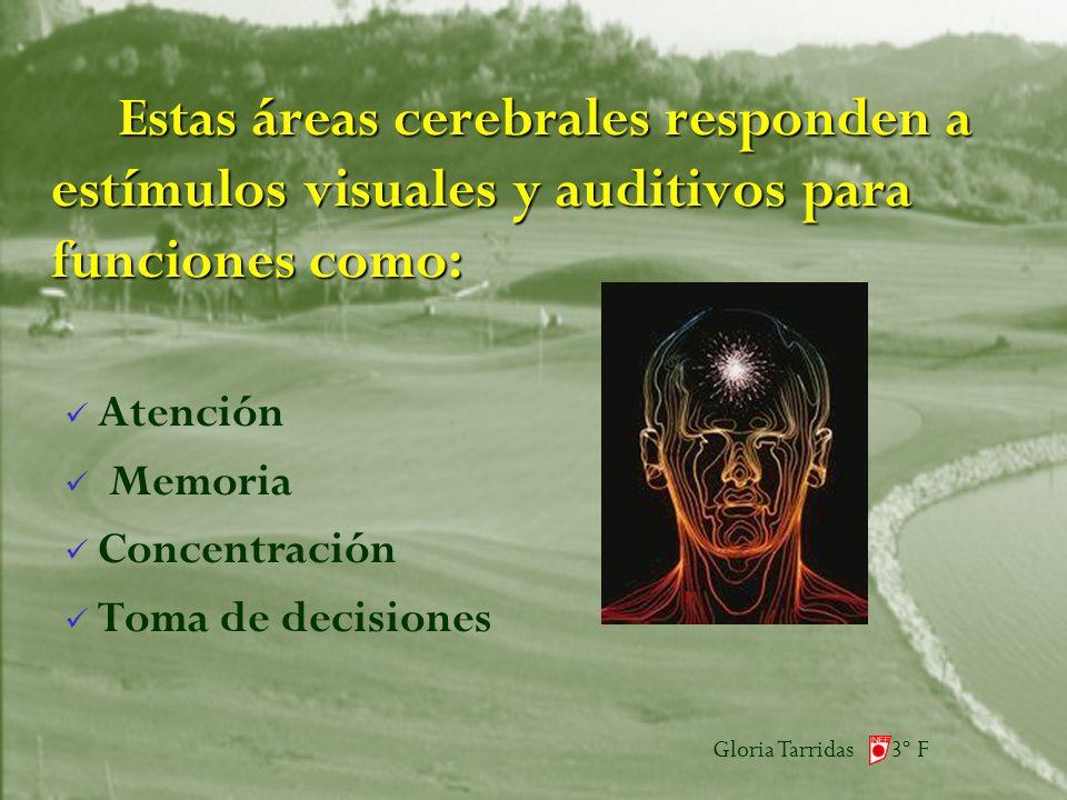 Gloria Tarridas 3º F Estas áreas cerebrales responden a estímulos visuales y auditivos para funciones como: Atención Memoria Concentración Toma de decisiones
