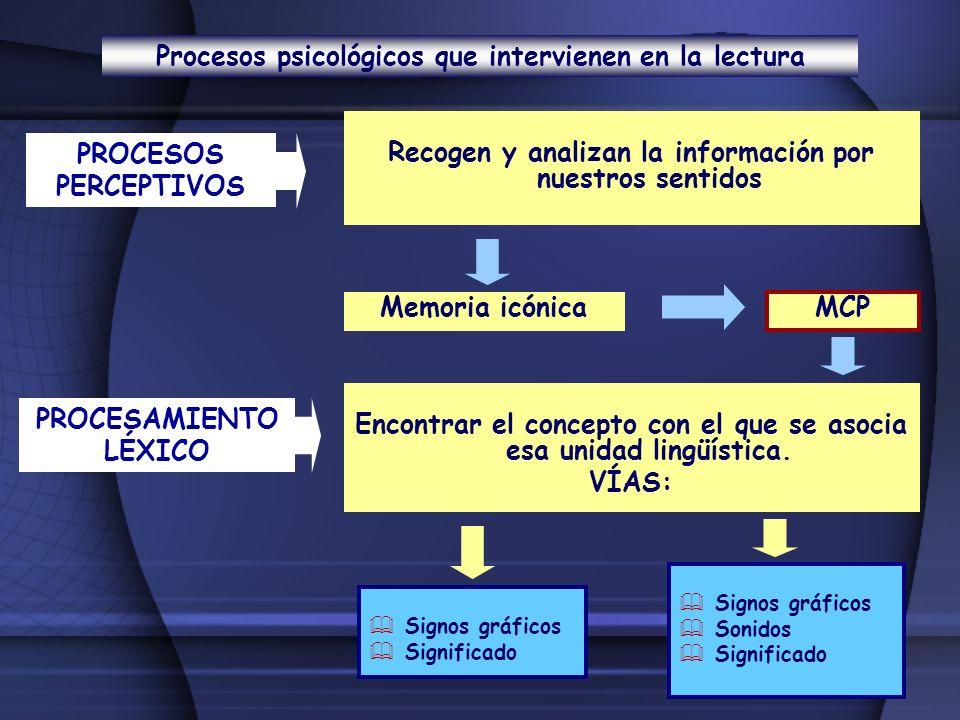 Procesos psicológicos que intervienen en la lectura PROCESOS PERCEPTIVOS Recogen y analizan la información por nuestros sentidos Memoria icónica MCP P