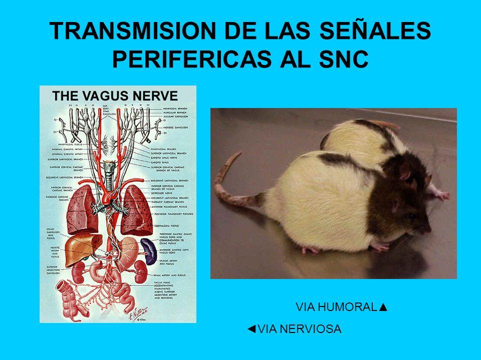 TRANSMISION DE LAS SEÑALES PERIFERICAS AL SNC VIA HUMORAL VIA NERVIOSA