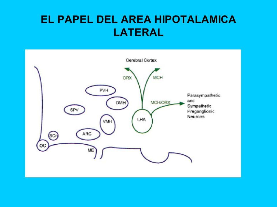 EL PAPEL DEL AREA HIPOTALAMICA LATERAL