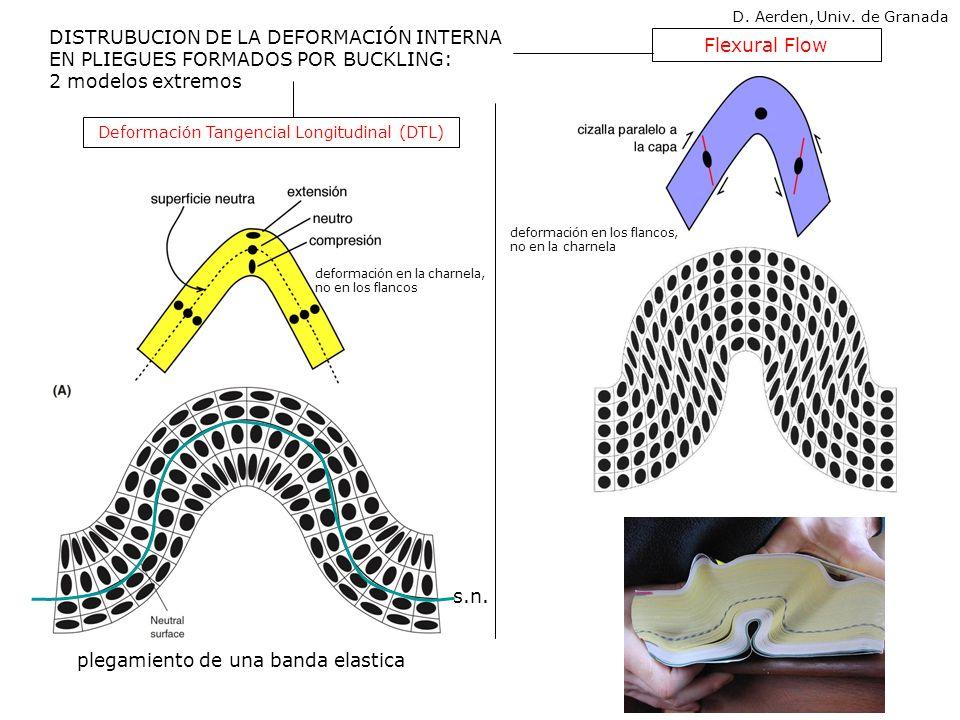 Flexural Flow DISTRUBUCION DE LA DEFORMACIÓN INTERNA EN PLIEGUES FORMADOS POR BUCKLING: 2 modelos extremos plegamiento de una banda elastica Deformaci