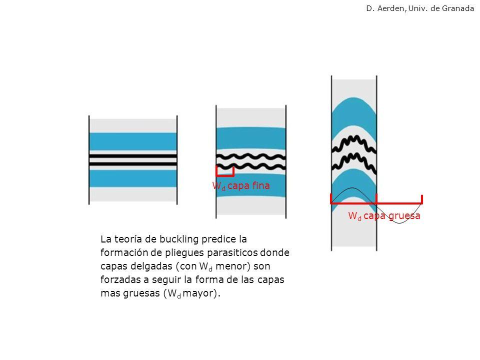 La teoría de buckling predice la formación de pliegues parasiticos donde capas delgadas (con W d menor) son forzadas a seguir la forma de las capas ma