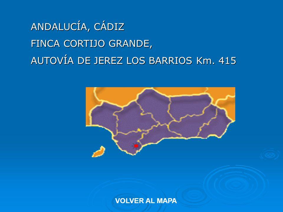 ANDALUCÍA, CÁDIZ FINCA CORTIJO GRANDE, AUTOVÍA DE JEREZ LOS BARRIOS Km. 415 VOLVER AL MAPA